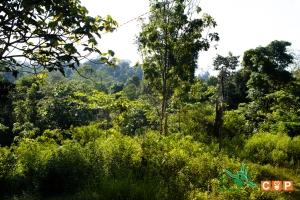 Borneo Day 2-1