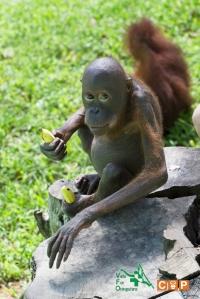 Borneo Day 2-10