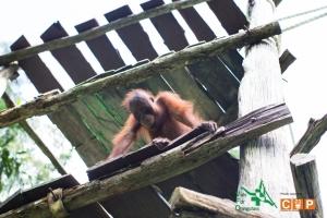 Borneo Day 2-12