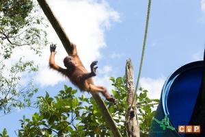 Borneo Day 2-14
