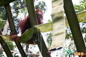 Borneo Day 2-15