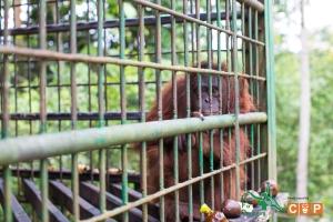 Borneo Day 2-18