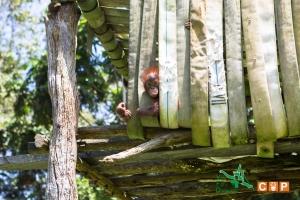 Borneo Day 2-19