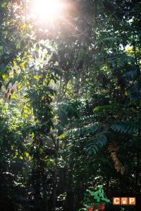 Borneo Day 2-2