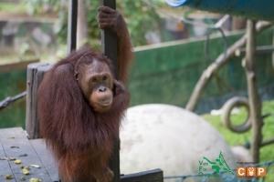 Borneo Day 2-21
