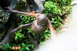 Borneo Day 2-5