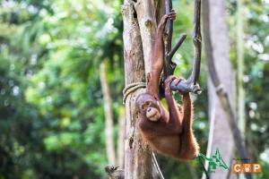 Borneo Day 2-6