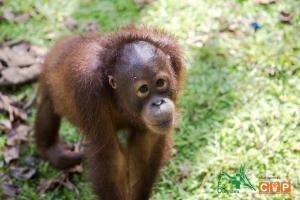 Borneo Day 2-7