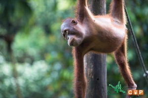 Borneo Day 2-8