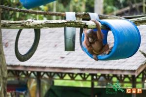 Borneo Day 2-9